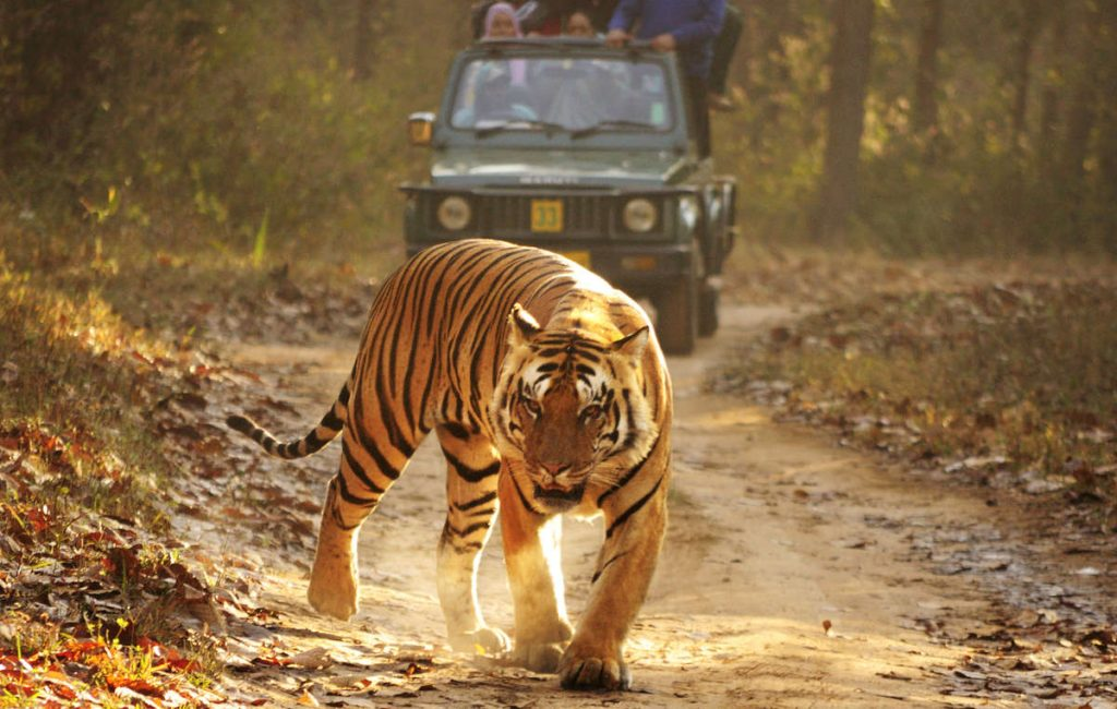 Kanha Tiger park In India